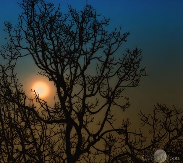 moontree2