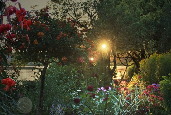 watergardencroplight