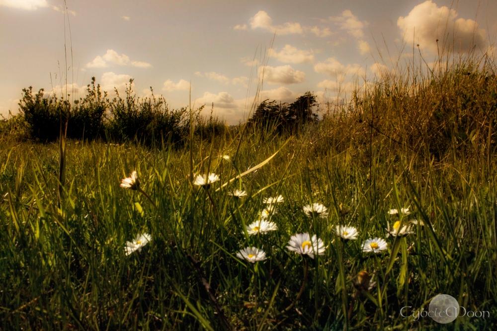 daisygrasssig