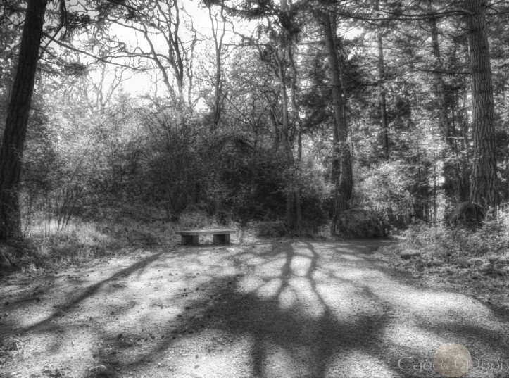 solitude in the shadows