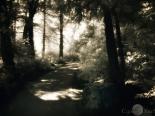 Niamh's evening path