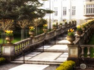 tulip steps