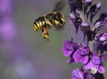 where the bee sucks......