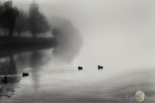 calming the foggy ducks in the estuary