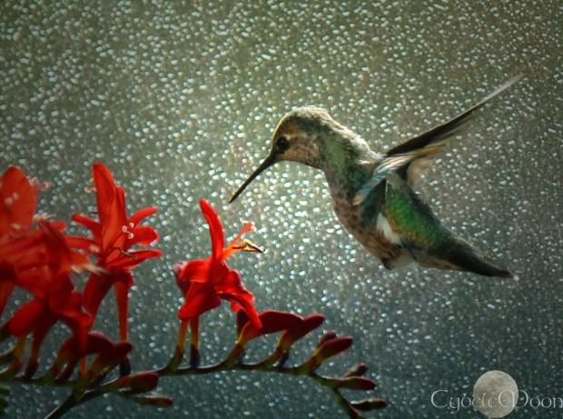 hummingbirdon texturedglasssig