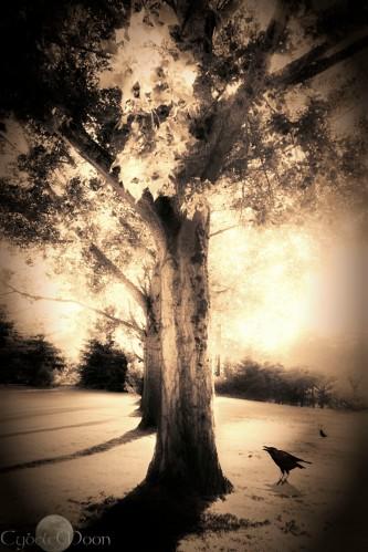 tree film2gold