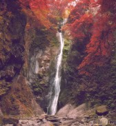 waterfall in Goldstream Park