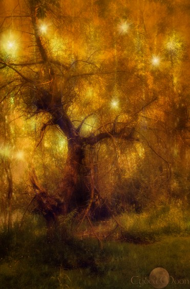 the stars rained in midsummer (Tales of the tuatha)