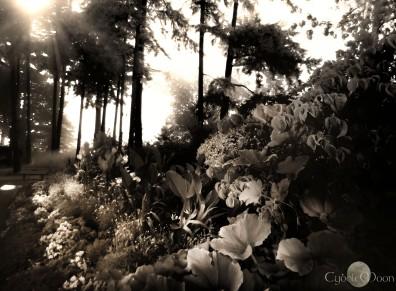 garden in sepia