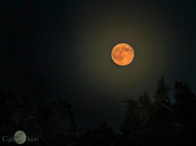 the marmalade moon