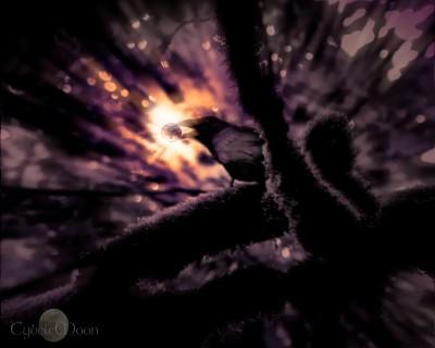 raven dream