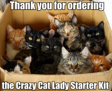 Thank-you-for-ordering-the-crazy-cat-lady-starter-kit
