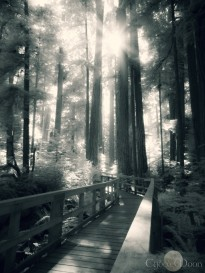 Cathedral Grove Bridge