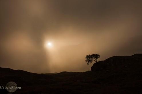 moor tree