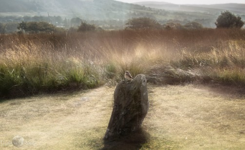 the spirit of the standing stones