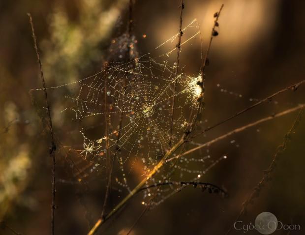 shining web