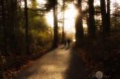 atumn walk