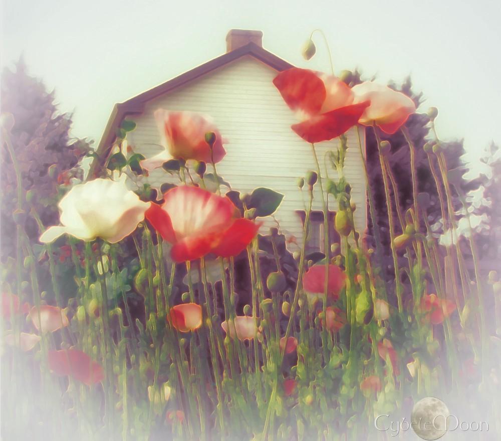 poppiesart