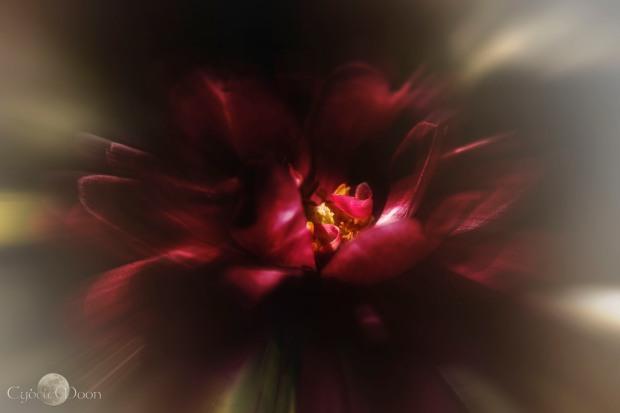 Robin's Rose