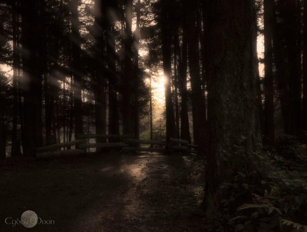 walk in the woods again