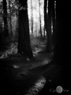 woodland pathlight
