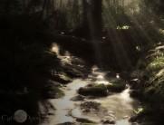 Devonian Brook