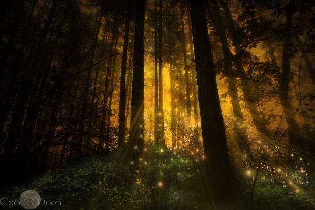 Niamh's woods