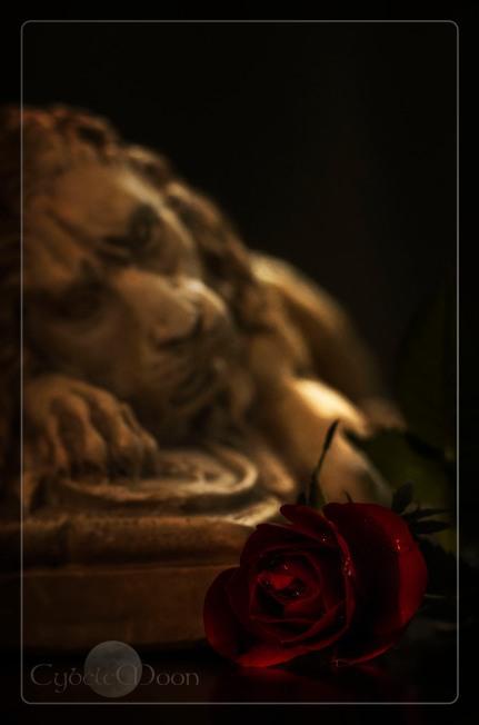 lionrose