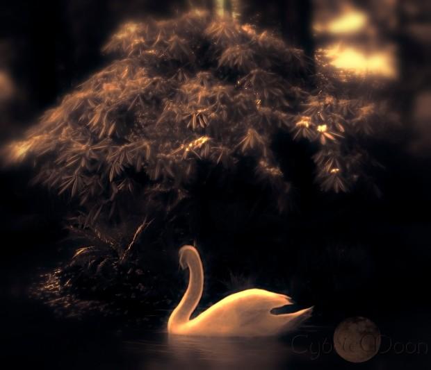 swanpool