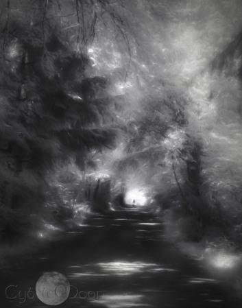 The Lochside Trail