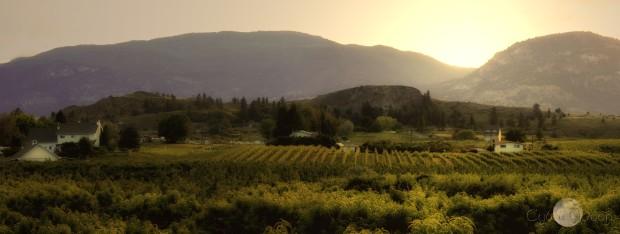 vineyardsskaha