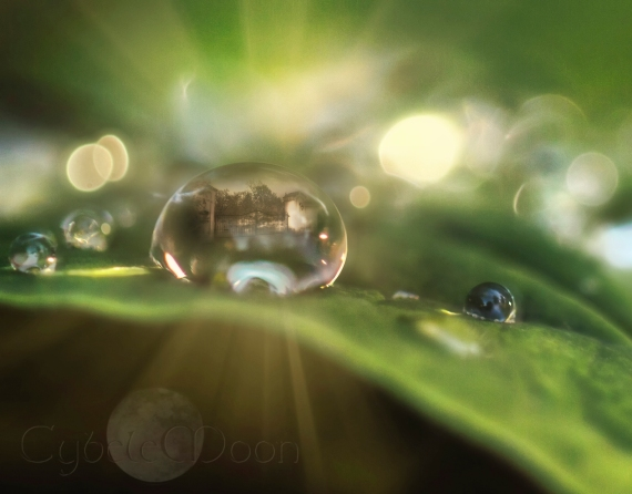 world in a rain drop