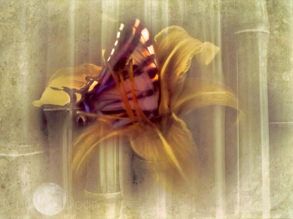 butterflyem2bamboogold