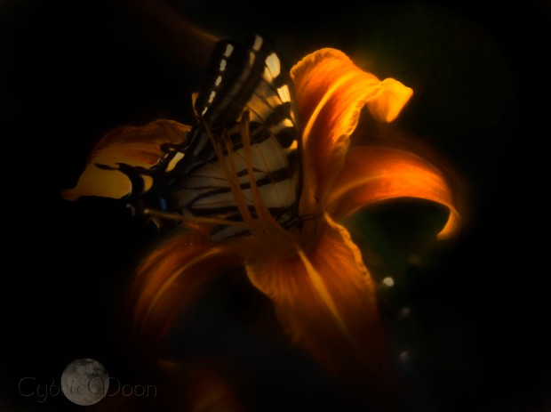 butterflyemlight