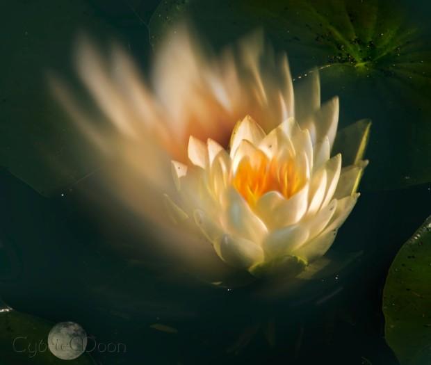 lotuslightblur