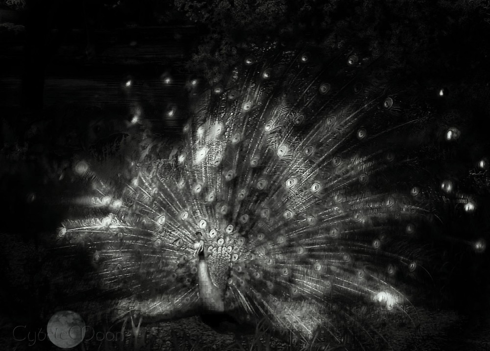 a monochrome peacock