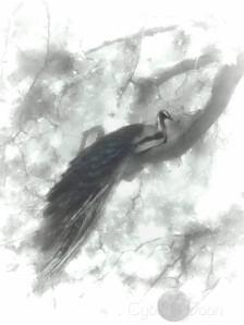 silver milk peacock