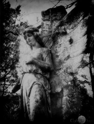 angelinfra
