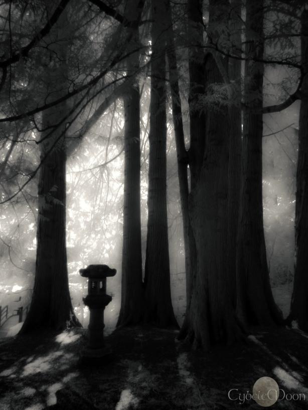 woodland spirits