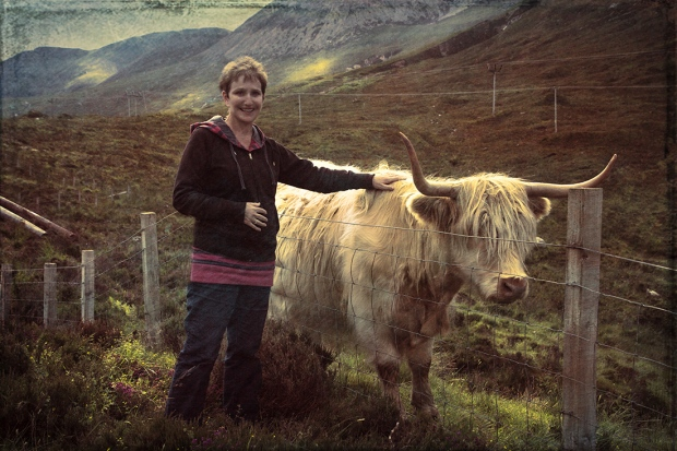 highland coo2