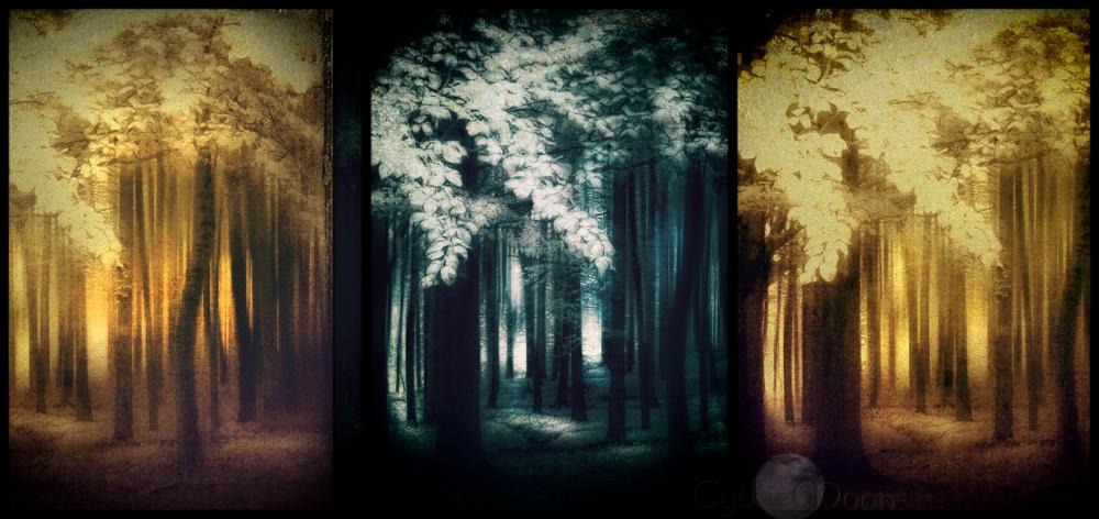 woodland multilens2