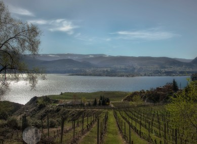 vineyards by the lake
