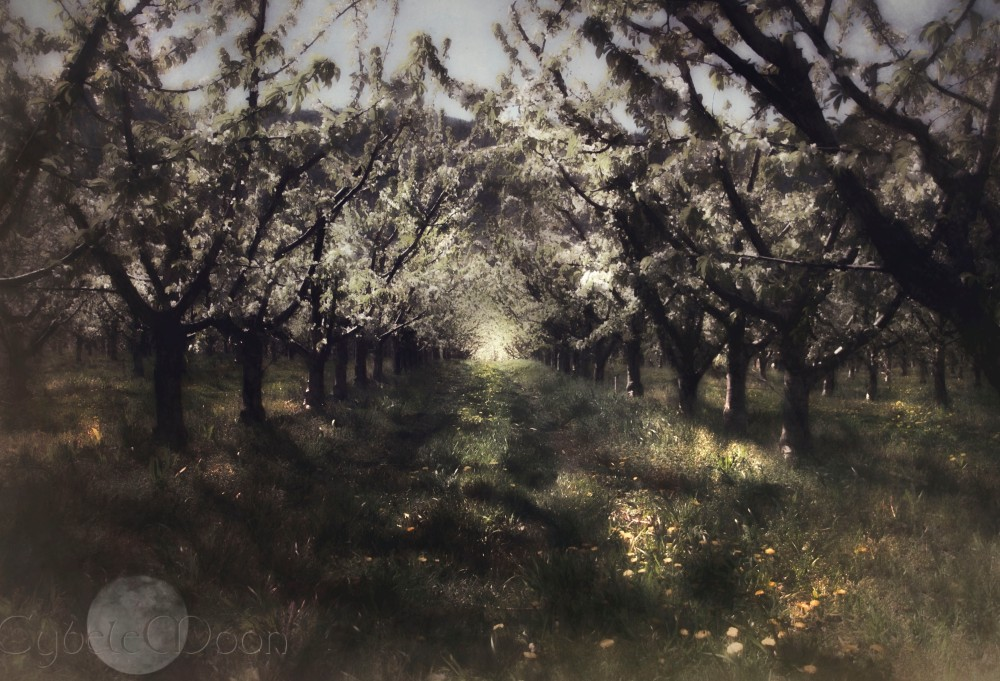 orchard2