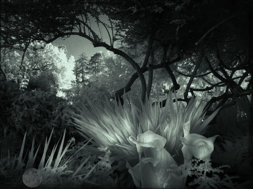 garden of the alchemist