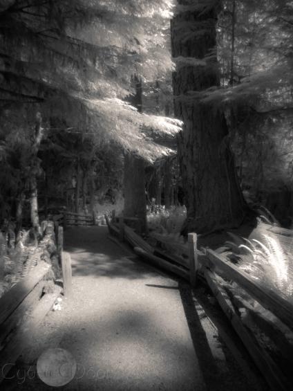 MacMillan Forest