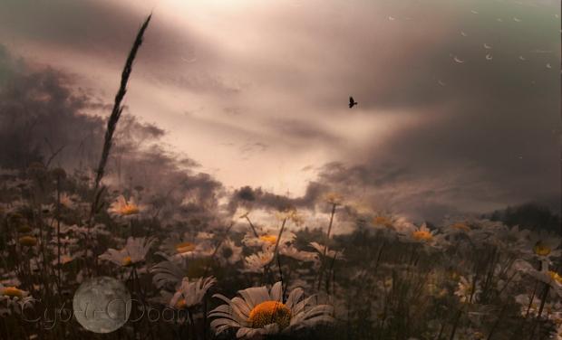 seaside daisies2asmall