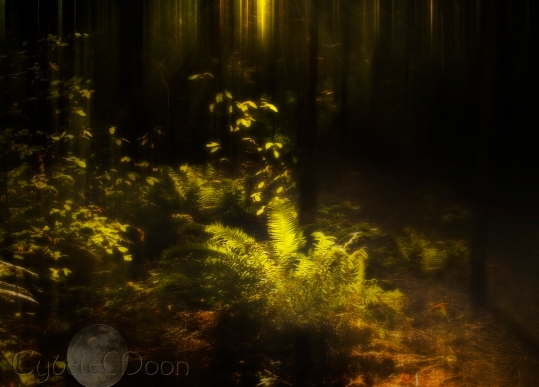 the-woodland-curtainrays2