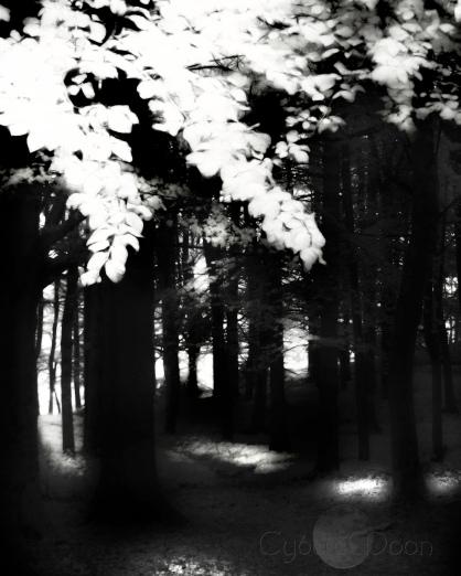 woodland-dark