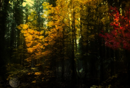 fall-forest2