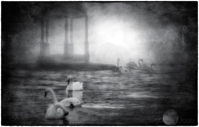 the-lovely-swans2border